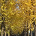 写真: 黄色いトンネル