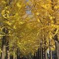 黄色いトンネル