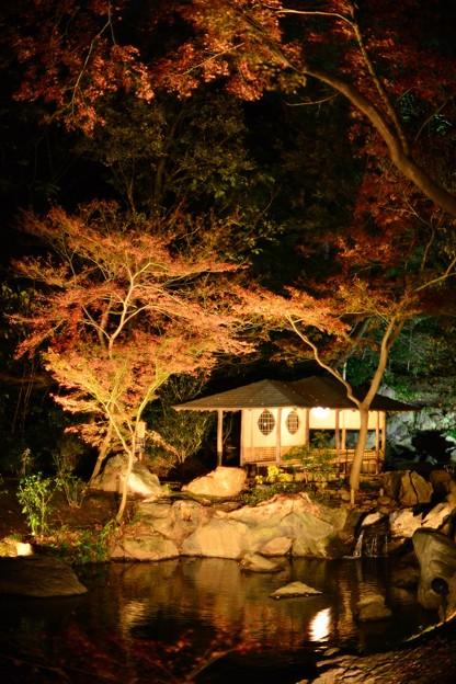 六義園・滝見の茶屋・紅葉ライトアップ