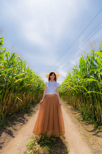 トウモロコシ畑にて