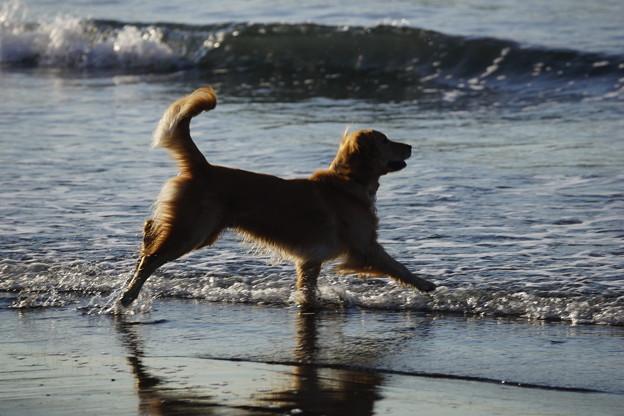 写真: 浜辺の犬