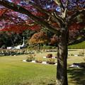 写真: 晩秋の英連邦墓地