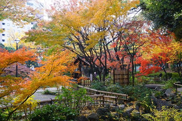 写真: 横浜公園