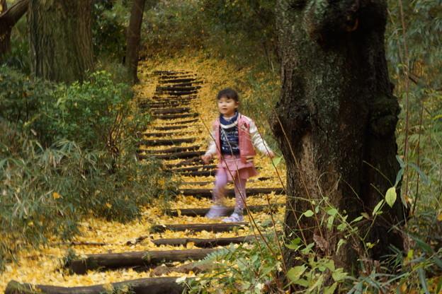 写真: 銀杏の散歩道