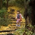 銀杏の散歩道