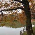 写真: 湖畔