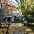 写真: 春草蘆