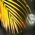 写真: 観葉植物の紅葉