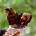 Photos: シンガポールの鳥