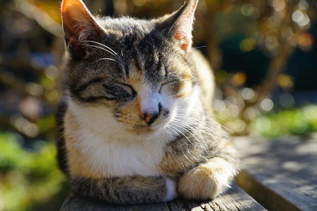 写真: 眠る猫