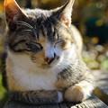 Photos: 眠る猫