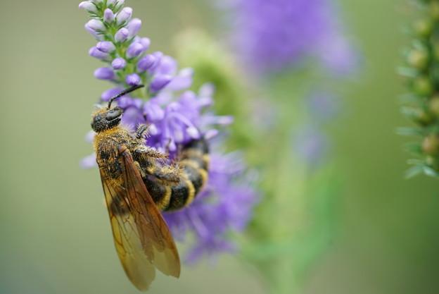 写真: 蜂