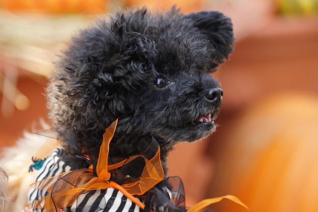 Photos: 子犬