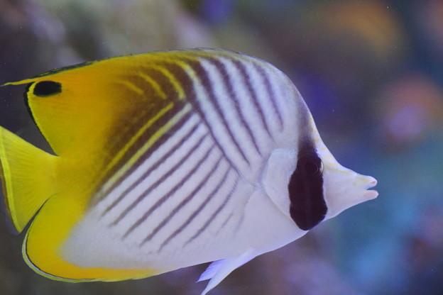 沖縄の熱帯魚