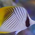写真: 沖縄の熱帯魚
