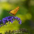 照片: 花と蝶