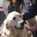 写真: 愛される犬