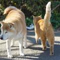 写真: 犬と猫