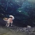 Photos: 犬