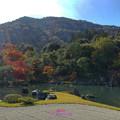 写真: 日式庭院之美