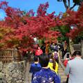 写真: 紅葉與旅人
