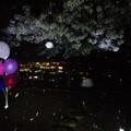 夜桜花吹雪の中で