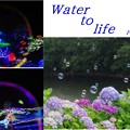 写真: 水と命