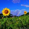 Photos: 1499956878_46