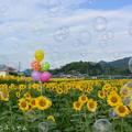 Photos: 1500479849_44