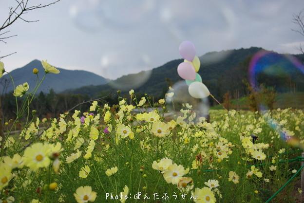 写真: 1504471579_32