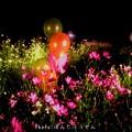 Photos: 1504639615_34