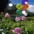 Photos: 1505014792_77