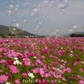 写真: 1506438765_63