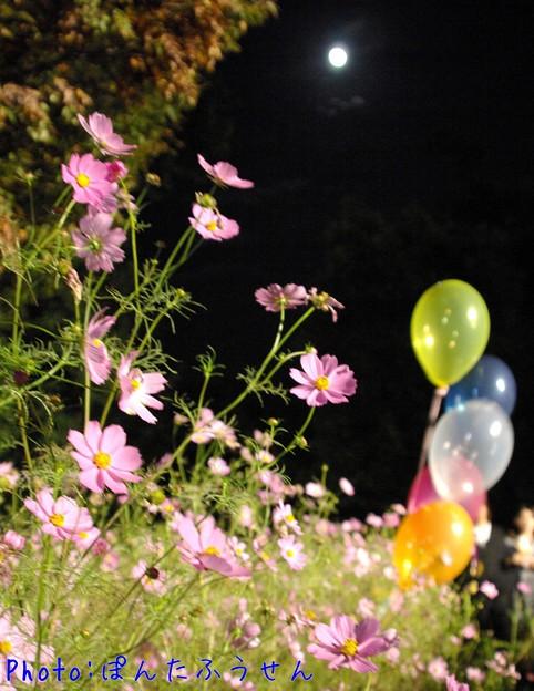 Photos: 1507125735_18