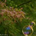 Photos: 1507298712_0