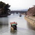 写真: 春の宇治川