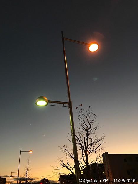 写真: Sunset & Street lamp ~一番星へ向かって