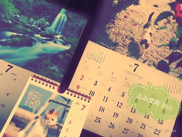 Photos: もう文月ちゃんにゃ ~蒸し暑い梅雨中もう7月
