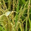 写真: 蝶も遊びに来れるのどかな世界 ~zoom in butterfly like the world