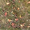 写真: colorful palette ~autumn in leaves~落ち葉