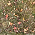 Photos: colorful palette ~autumn in leaves~落ち葉