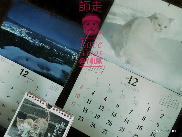 写真: Love Xmas Start☆師走12月☆岩合光昭さん雪にゃんこ白猫~養命酒の信州湖夜景~2017 calendar Last shot!