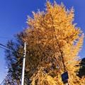黄金に輝く黄葉!思わず立ち止まりフィルム風~旅の途中~gold leaves