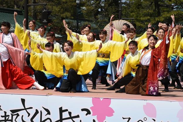 写真: 京都さくらよさこい3