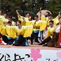 Photos: 京都さくらよさこい3