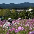 上越丘陵公園 (花に埋もれて)