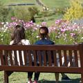 上越丘陵公園 (花の向こうに)