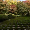 写真: 三玲の庭と紅葉