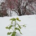 Photos: 春の嵐耐える