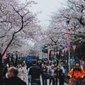 写真: 隅田公園